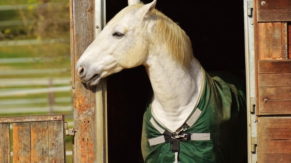 Lad hesten nyde de lyse timer