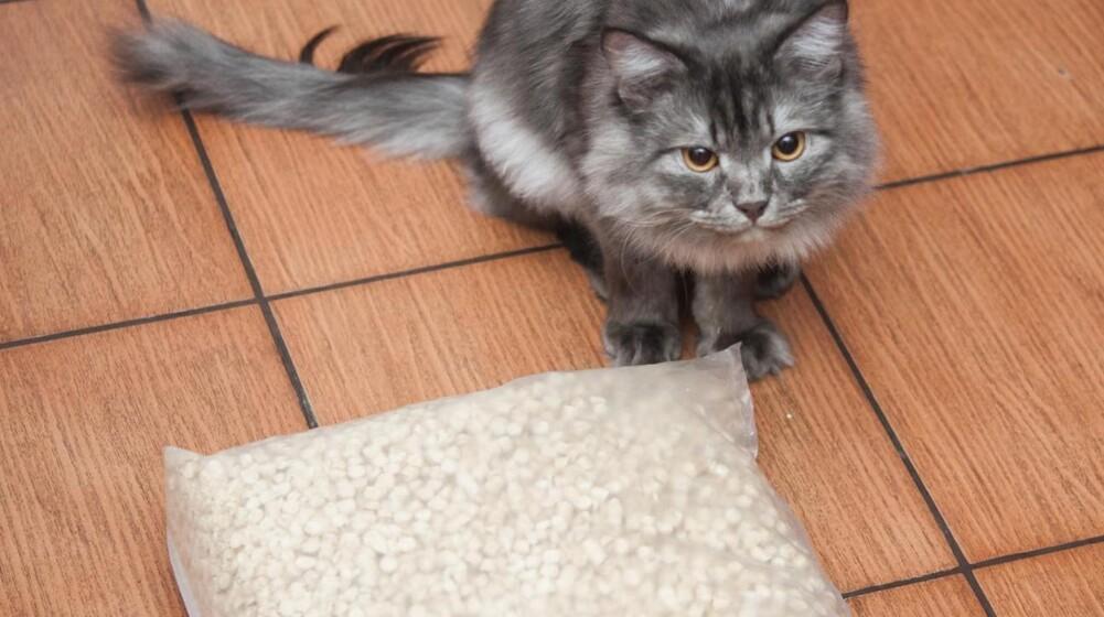 Fem overraskende ting, du kan bruge kattegrus til