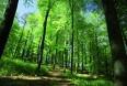 Sidste udkald for skovrejsning efter...