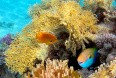 Sharm med varme og charme