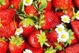 Første danske jordbær nu i handlen