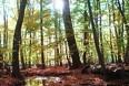 Husk at nyde skoven