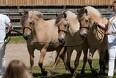 Heste sætter rekord på Landsskuet