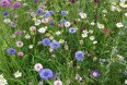 Blomstermark på landbrugsskole hitter