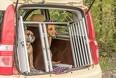 Undgå køresyge kæledyr i efterårsferien
