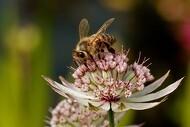 Lokale bier slår de importerede