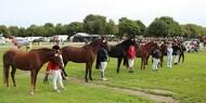 Danmarks største udendørs hesteevent