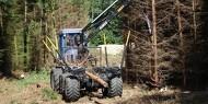En pæn egeskov efter udtynding