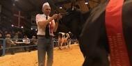 Kvægkonkurrencer sendes direkte på nettet