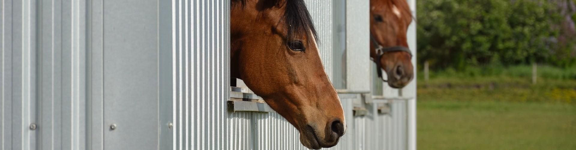 Hesteloven skal ændres