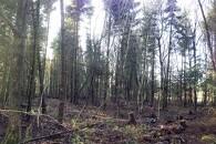 Hent værdier i den lille skov