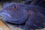 Lillebælt tilbyder dykkerspots i særklasse