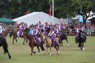 Walisiske ponyer og heste på Roskilde Dyrskue