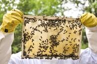 Bier som miljøvogtere