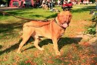Er din hund Danmarks sødeste?