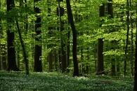 Skovquizzen er nu åben