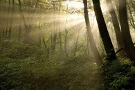 Få tilskud til skoven