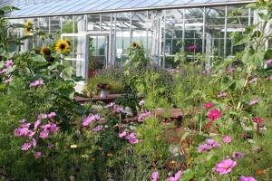 Have med økologiske kvaliteter