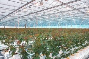 Bæredygtige solcellepaneler til væksthuse