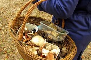 God svampesæson giver mange forgiftninger