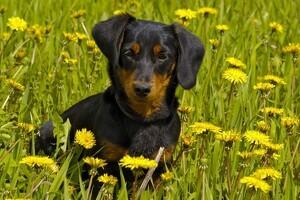Aflivningstruede hunde får hjælp
