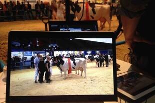 Direkte tv fra Landsskuets kvægkonkurrencer