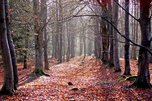 Inviter skolen ud i skoven