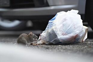 10 råd til at undgå rotter
