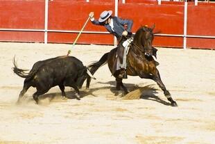 Ingen støtte til tyrefægtning
