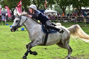Heste og hunde fejres på Store Hestedag