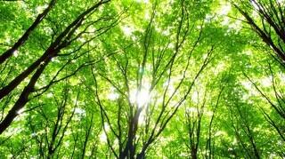 Det tynder ud i sager om skovrejsning