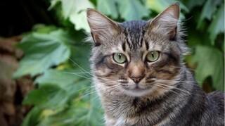 Sommerferie med eller uden kat?
