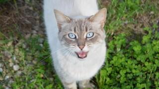 Det vidste du (måske) ikke om katte