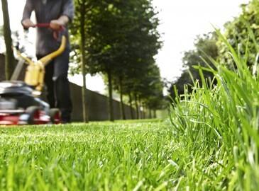 Få en flottere og stærkere græsplæne