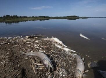 Kraftig regn efter tørke kan give fiskedød