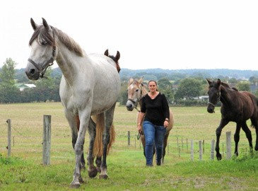 Passion for spanske heste