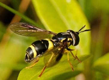 Hvepsesæson: Sådan passer du bedst på dit kæledyr