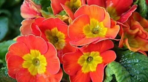 5 ting, du kan gøre i haven nu