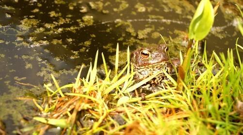 10 ting du kan gøre for naturen i din have