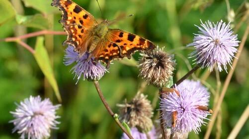 Guide til at gøre haven insektvenlig