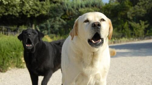 Hunde får også tandpine