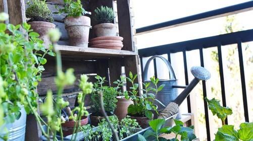 Dyrk køkkenhave i vinduet og på altanen