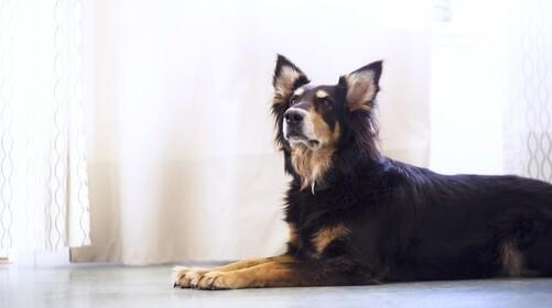 Fire sjove julegave-idéer til dit kæledyr