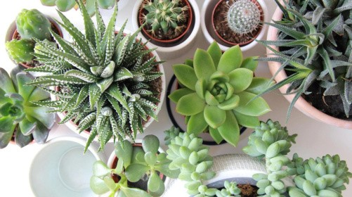 Undgå fælderne: Fem dårlige råd om stueplanter
