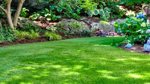 Sådan sikrer du græsset næste år