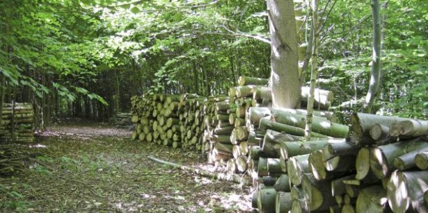 Håndbog i bedre skovrejsning