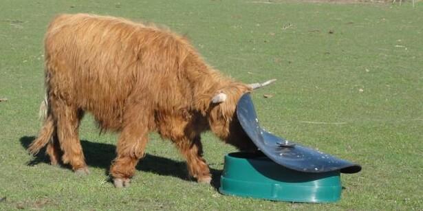 Mineralautomat til får og kvæg med store horn