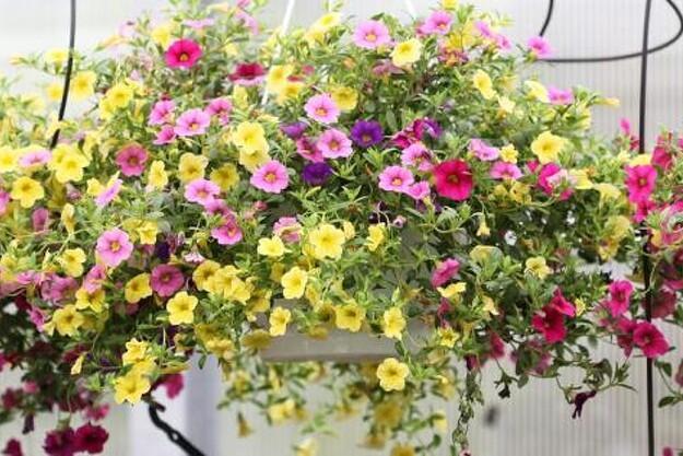 hænge blomster til krukker