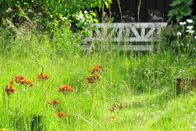 Planter som engkarse, kulsukker, natlys, fingerbøl og grøn høgeskæg er kommet af sig selv.