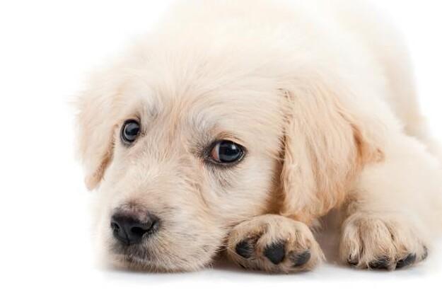Vær opmærksom på hygiejnen, når du leger med din hund. Den kan have multiresistente bakterier.